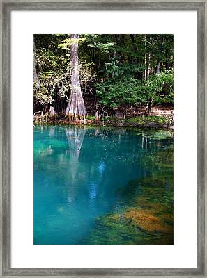Framed Print featuring the photograph Manatee Spring by Doug McPherson