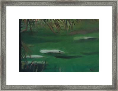 Manatee's Winter Home Framed Print by Betty Pimm