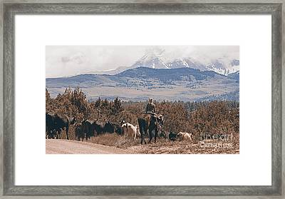 Mancos Cowgirl Cattle Drive Framed Print by Janice Rae Pariza