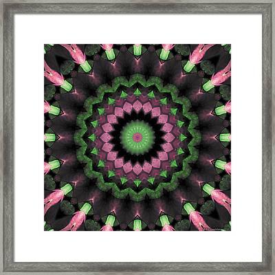 Mandala 34 Framed Print by Terry Reynoldson