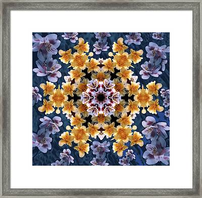 Mandala Alstro Framed Print