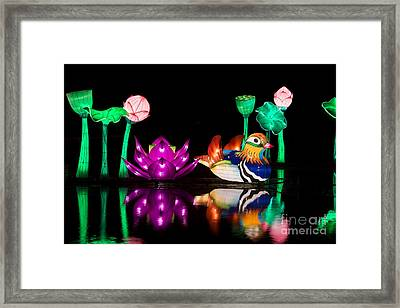 Mandarin Duck Chinese Lantern Framed Print by Tim Gainey