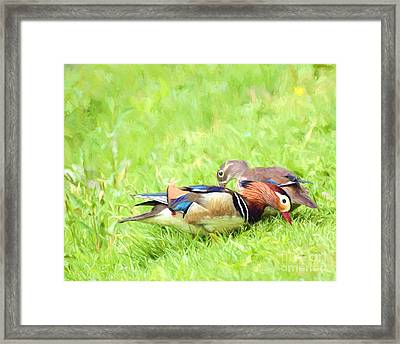 Mandarin Duck Couple Framed Print