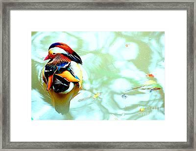 Mandarin Duck Resting II Framed Print by C Lythgo