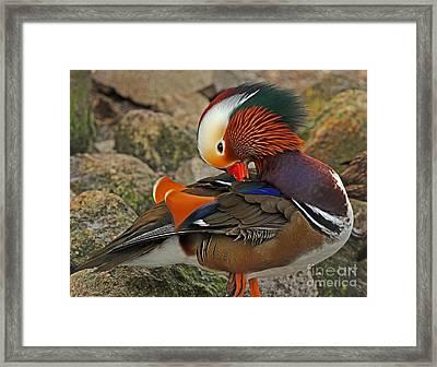 Mandrin Duck Framed Print by Larry Nieland