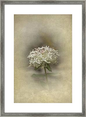 Framed Print featuring the photograph Mandy by Elaine Teague