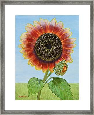 Mandy's Magnificent Sunflower Framed Print