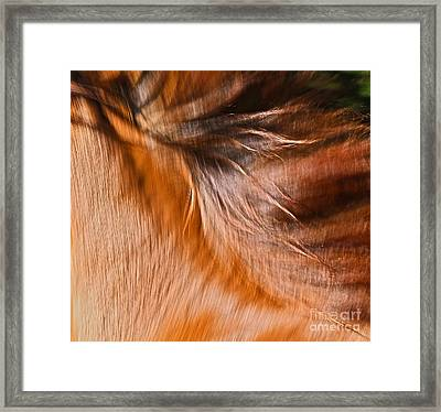 Mane Dance Light Framed Print