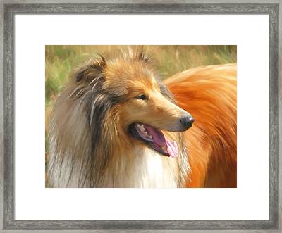 Maned Collie Framed Print by Daniel Hagerman