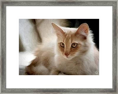 Mango Framed Print by Gun Legler