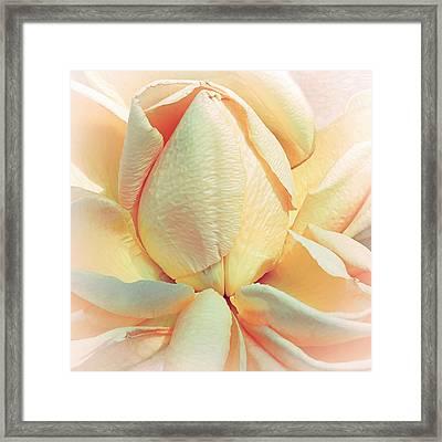 Mango Smoothie Framed Print by Darlene Kwiatkowski