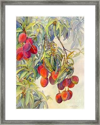 Mangoes In The Evening Light Framed Print by Dorothy Boyer