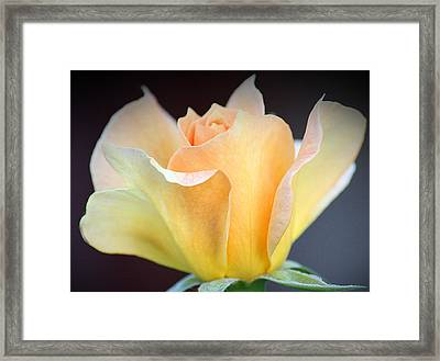 Framed Print featuring the photograph Mango's Dance by The Art Of Marilyn Ridoutt-Greene