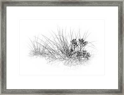Mangrove And Sea Oats-bw Framed Print by Marvin Spates