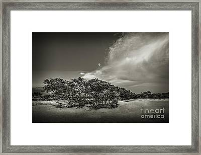 Mangrove At Low Tide Framed Print