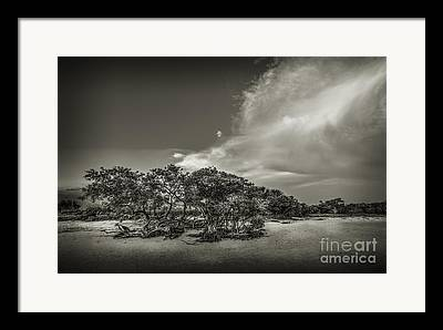 Grassy Beach Framed Prints