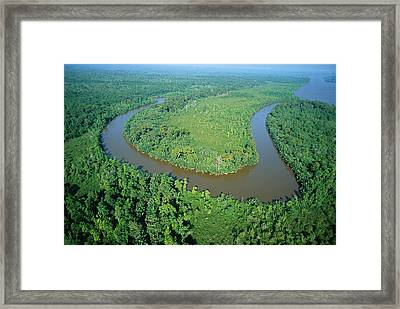 Mangrove Forest In Mahakam Delta Framed Print