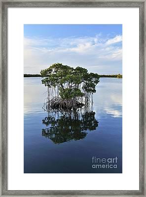 Mangrove Island Framed Print by Andres LaBrada