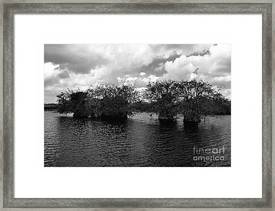 Mangrove Islands Framed Print by Andres LaBrada