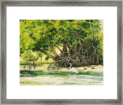 Mangrove Morning Framed Print