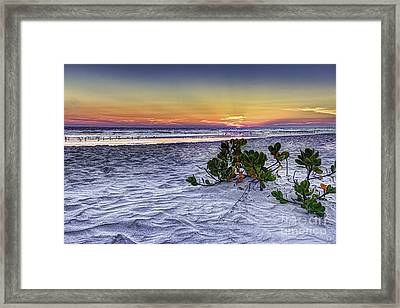 Mangrove On The Beach Framed Print