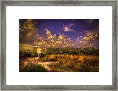 Mangrove Path Framed Print by Marvin Spates