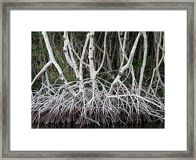 Mangrove Roots Framed Print