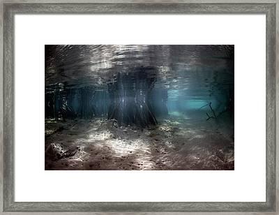 Mangrove Swamp Framed Print