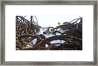 Mangrove Tree Roots Detail Framed Print by Dirk Ercken