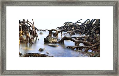 Mangrove Tree Roots Framed Print