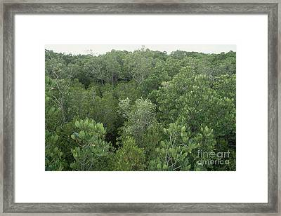Mangrove Trees Framed Print by Gregory G. Dimijian, M.D.