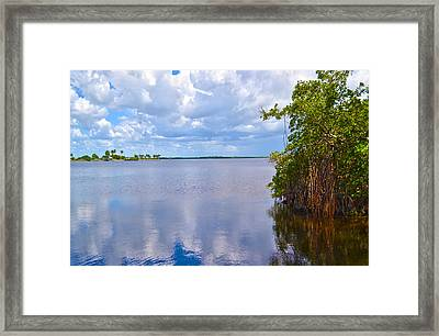 Framed Print featuring the photograph Mangroves In Matlacha Florida by Timothy Lowry