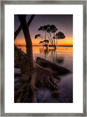 Mangroves Of Beachmere Framed Print