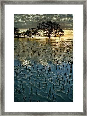 Mangroves Framed Print by Robert Charity