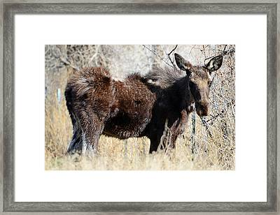 Mangy Moose Framed Print