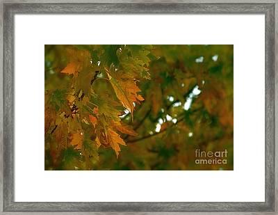 Manhattan Fall Framed Print by Photography by Tiwago