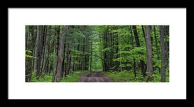 Manistee National Forest Framed Prints