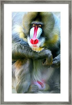Manny The Mandrill Framed Print