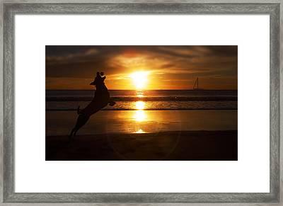 Man's Best Friend  Framed Print by Kenny  Noddin
