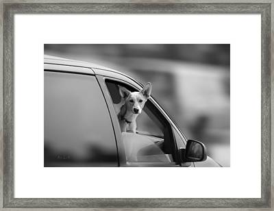 Mans Best Friend Riding Shotgun Framed Print by Bob Orsillo