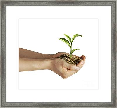 Mans Hands Holding Soil With A Little Framed Print