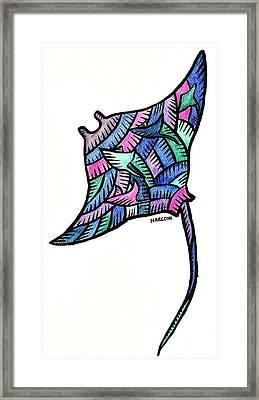 Manta Ray 2009 Framed Print