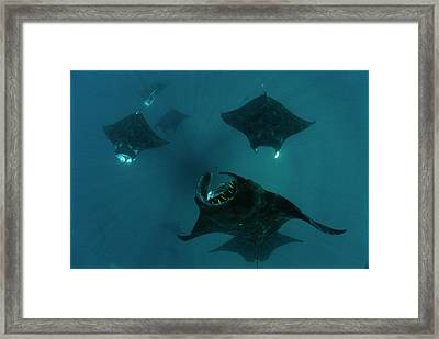 Mantas Glide In Currents Ripping Framed Print