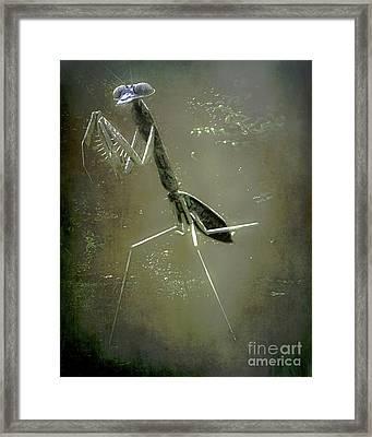 Mantis II Framed Print by Arne Hansen