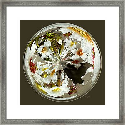 Many Colored Centers Framed Print by Phyllis Denton