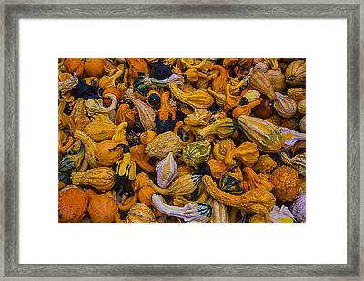 Many Colorful Gourds Framed Print by Garry Gay