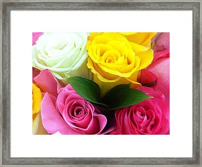 Framed Print featuring the photograph Many Roses by Alohi Fujimoto