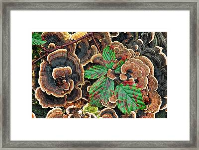 Many-zoned Polypore Or Turkey-tail Framed Print by Nigel Downer