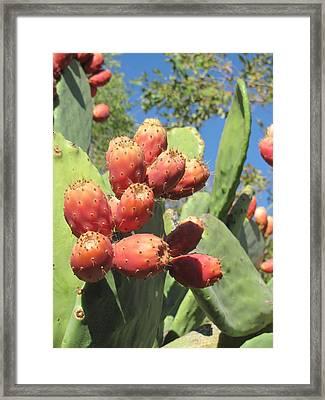 Manzanas Rojas Framed Print
