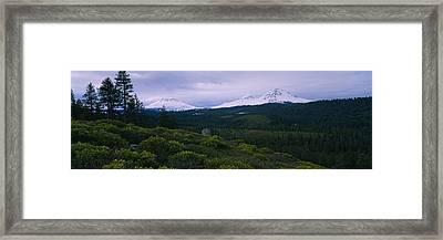 Manzanita Arctostaphylos Manzanita Framed Print by Panoramic Images